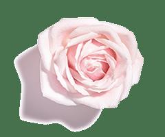 Musc rose oil