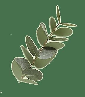 Органический Эвкалипт