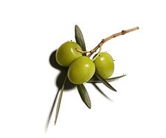 Oliven-Squalanen