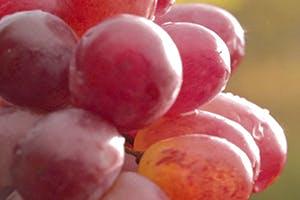 Weintraubenwasser